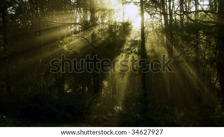 Morning early sunlight through foggy forest_04