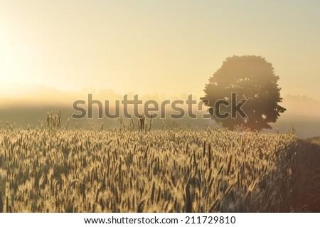 Morning field - stock photo