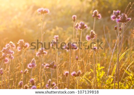 Morning field background with wild flowers - stock photo