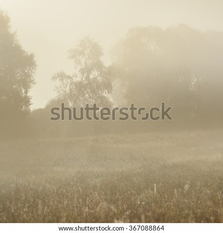 Morning fog above the field