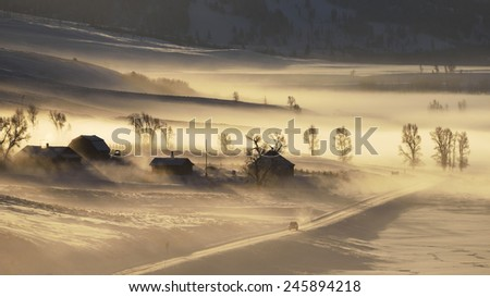 Morning fog at Lamar Valley in Yellowstone National Park. - stock photo