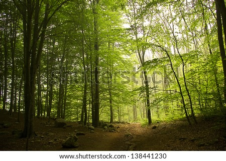 Morning fog in a forest (Catalonia, Spain) - stock photo