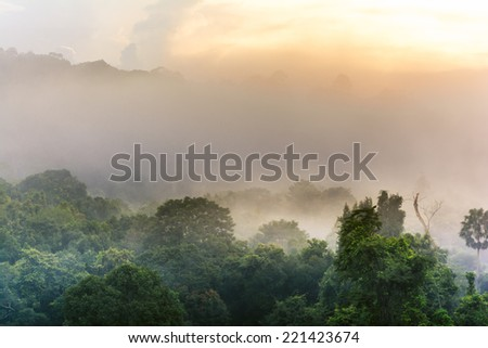 morning fog in dense tropical rainforest,Khao Yai National Park Thailand - stock photo