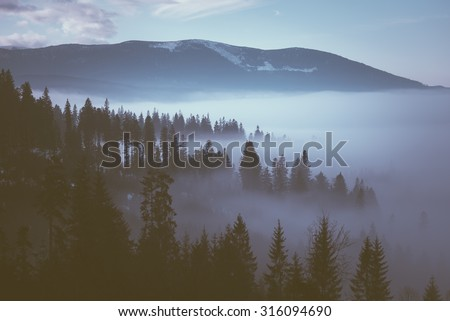 Morning fog in the mountains. Winter landscape with fir forest on mountain slopes. Color toning. Low contrast - stock photo