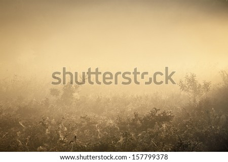 Morning fog over a field. Sepia tone - stock photo