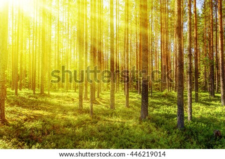 Morning forest in a sunny summer day. - stock photo