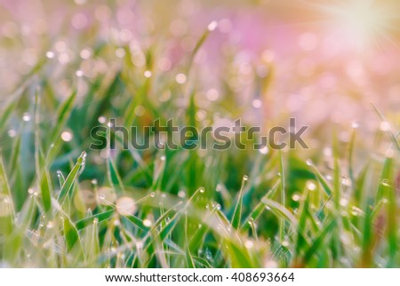 morning grass with dew drops. small depth of field. pink