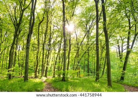 Morning in sunny forest with green trees