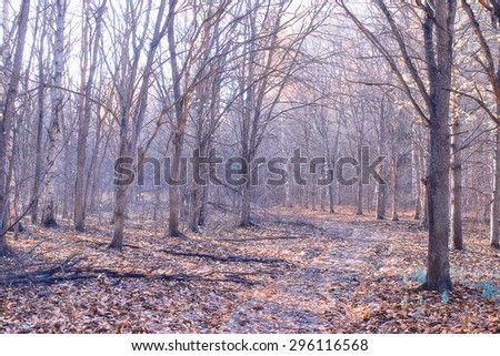 Morning in the autumn forest landscape - stock photo