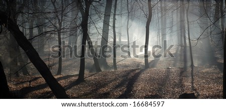 Morning in the central park - stock photo
