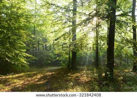 Morning in the forest - stock photo