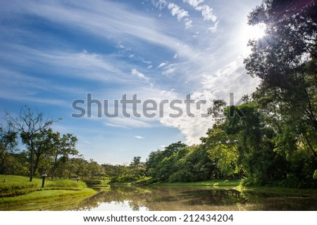 Morning in the park - stock photo