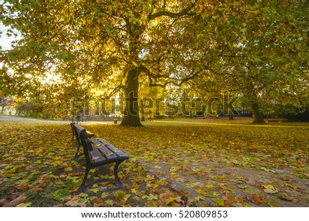 morning in the park in autumn, plane trees in autumn color