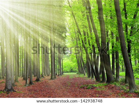 Morning in the spring forest - stock photo
