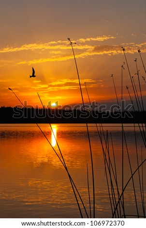 Morning lake landscape with sunrise over forest and bird - stock photo
