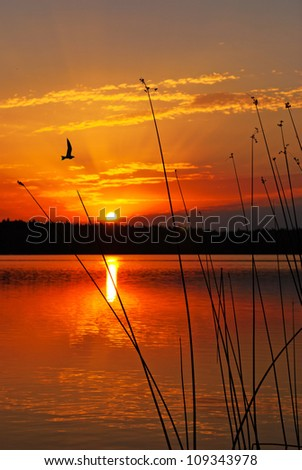 Morning lake landscape with sunrise over forest and bird