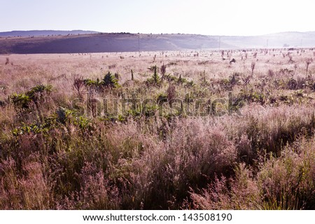 Morning, landscape - stock photo