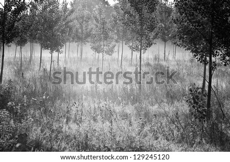 Morning landscape black and white - stock photo