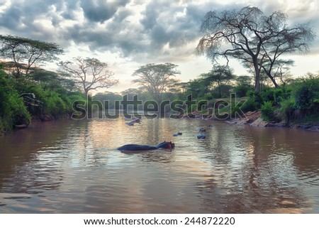 Morning landscape of African river and hippos family - stock photo