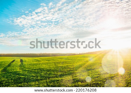 Morning landscape with green field, traces of  tractor in sun rays  - stock photo