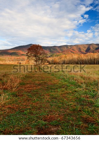 Morning light in autumn colors in the mountains at cades cove, tree bathing in the sun light - stock photo