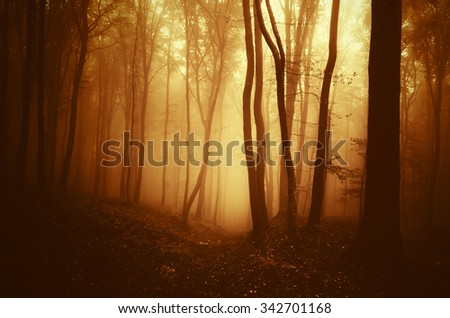morning light in forest - stock photo