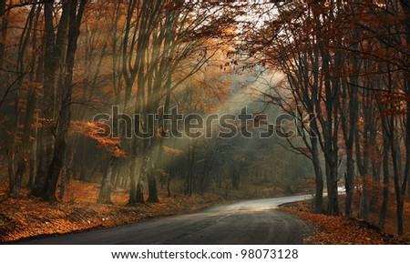morning light in the woods - stock photo
