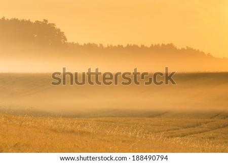Morning light. North Poland.Pomerania district/Morning light - stock photo