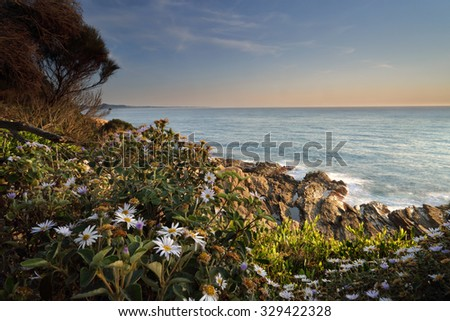 Morning light onwildflowers growing around the cliff face at Bermagui - stock photo