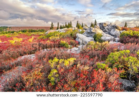 Morning light over autumn foliage at Bear Rocks Preserve in West Virginia's Dolly Sods. - stock photo