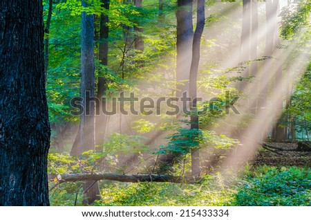 Morning Light Rays shining in the woods. - stock photo