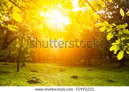 morning light through leafs in park - stock photo