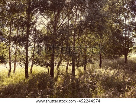 Morning light through the trees. - stock photo