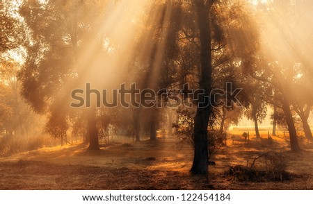 Morning lights in the forest - stock photo