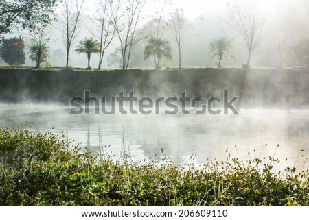 Morning Mist  - stock photo