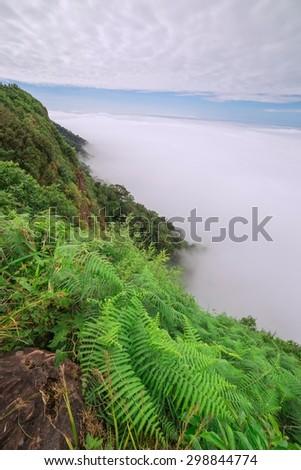 Morning mist in rainforest - stock photo