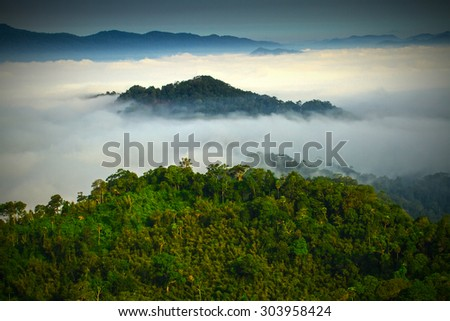 Morning mist in thailand.