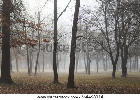 Morning mist in the park in early spring - stock photo