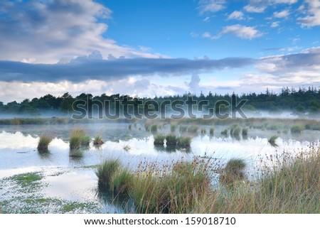 morning mist over bog, Fochteloerveen, Netherlands - stock photo