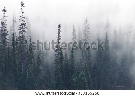 Morning mist rises from conifer forest in Joffre Lakes Provincial Park, British Columbia, Canada - stock photo
