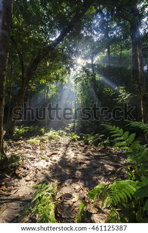 Morning mist rises up from rain forest floor with sun rays at Kanching Park in Selangor Malaysia