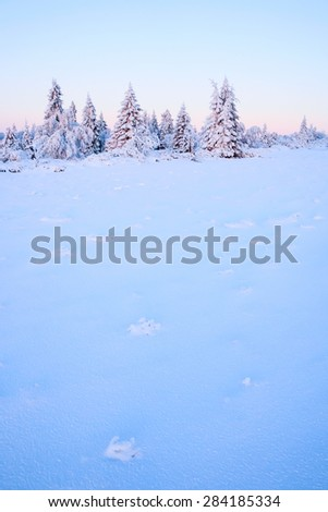 morning mood in the wintertime - stock photo