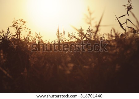 morning on a rural meadow