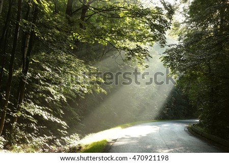 Morning rays in the deciduous forest after rainfall.