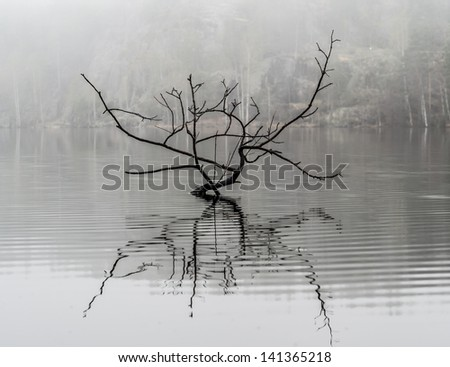 Morning's fog over the lake. Early spring morning, on a background big rocks. The lonely branch is reflected in water in the foreground. Karelia, Russia. Lake Hawk - stock photo