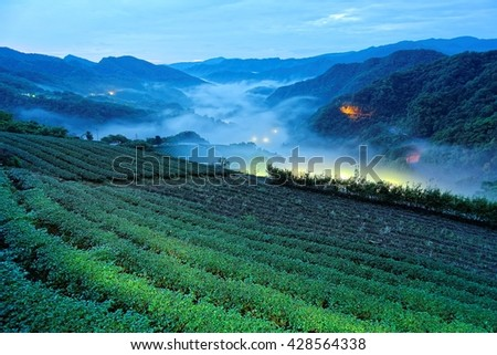 Morning scenery of tea gardens in the deep blue twilight before dawn with beautiful lights from the village in the valley and ethereal fog in a fresh spring atmosphere in Ping-ling, Taipei Taiwan - stock photo