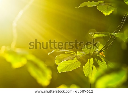 morning shot of leaves with rays of light - stock photo