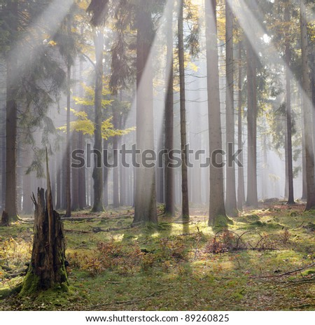 Morning sun beams in the forest - stock photo