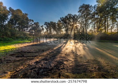 Morning sun enters the deciduous forest surrounded by mist floating over the water. - stock photo