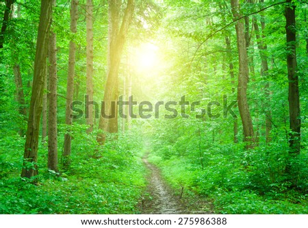 morning sun in the green forest